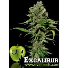 Excalibur Feminised Seeds