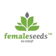 Auto NL Feminised Seeds