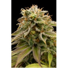 Lemon Thai Kush Feminised Seeds