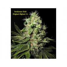 Original Afghani #1 Regular Seeds