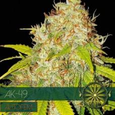 AK-49 AUTO Feminised Seeds