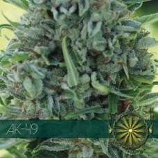 AK-49 Feminised Seeds
