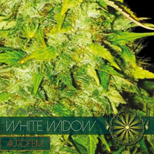 White widow auto feminised seeds mightylinksfo