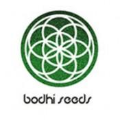 Bodhi Seeds